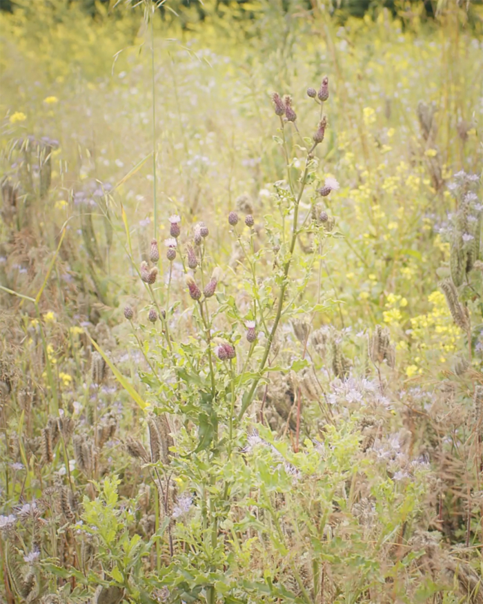 Blütenfreunde Blumenwiese